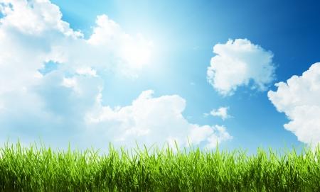 hintergrund himmel: Gras am sonnigen Tag