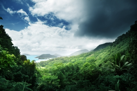 selva de la isla seychelles photo
