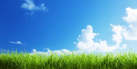 herbe à la journée ensoleillée Banque d'images