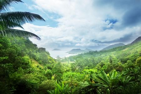 세이셸 섬의 정글