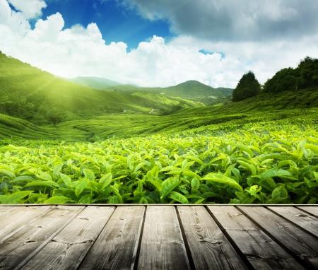 Plancher de bois sur les plantations de thé Cameron Highlands, Malaisie Banque d'images - 21490634