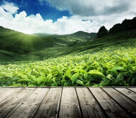 wood floor on tea plantation Cameron highlands, Malaysia