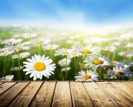daisy flower: field of daisy flowers and wood floor Stock Photo