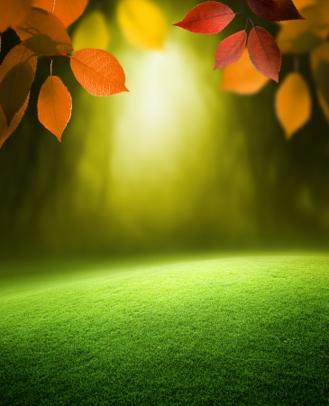Autumn forest  background photo