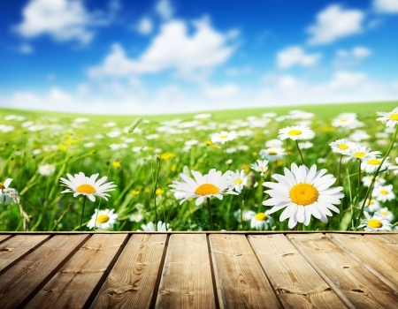 chamomile flower: field of daisy flowers and wood floor Stock Photo