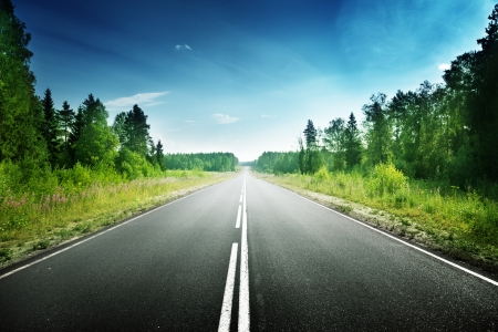 empty road: road in deep forest