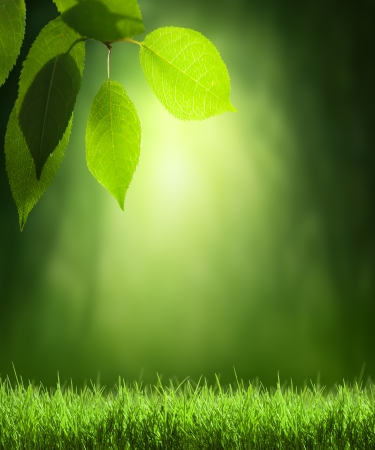 Spring forest  background Stock Photo - 22701543
