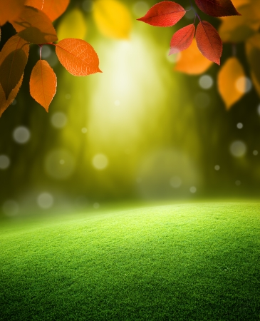 Autumn forest  background Stock Photo - 22701544