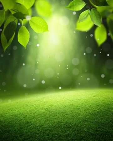 Voorjaar bos achtergrond Stockfoto