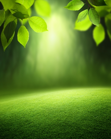 Fondo de bosque de primavera Foto de archivo - 22936247