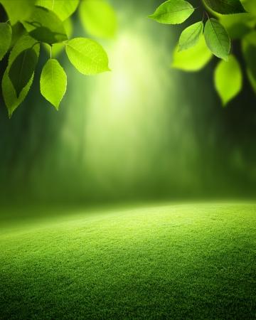 Spring forest Hintergrund Standard-Bild - 22936247