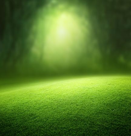 봄 숲 배경