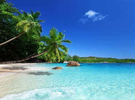 beach palm: beach at Praslin island, Seychelles  Stock Photo