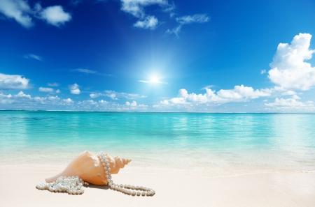 perls: sea shells and perls on the beach