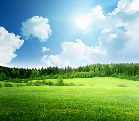 잔디와 완벽 한 하늘의 필드
