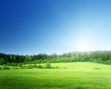 Campo d'erba e il cielo perfetto Archivio Fotografico - 23982777