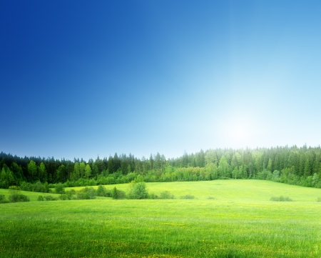gebied van gras en perfecte hemel