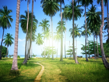 coconut trees: palms on beach of Phi Phi island, Thailand