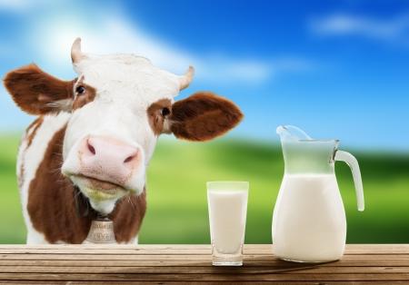 cow and milk Фото со стока