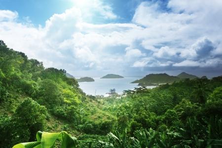 jungle of seychelles island  photo