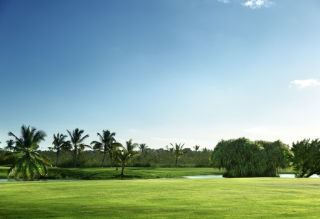 coconut trees: golf course