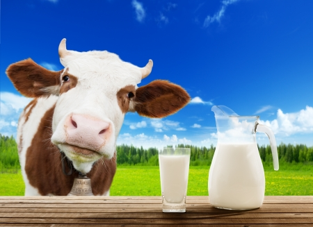 milk jugs: cow and milk Stock Photo