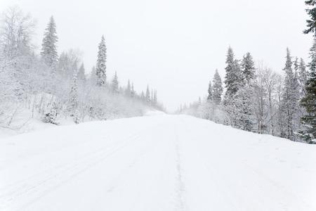 montañas nevadas: Camino del invierno en un bosque