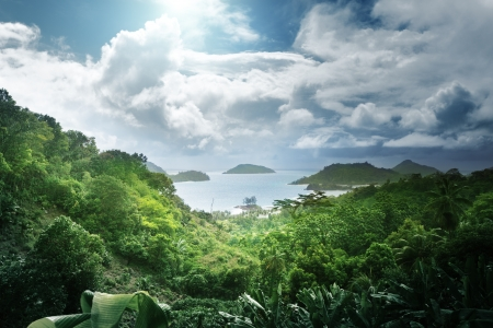 africa jungle: jungle of seychelles island