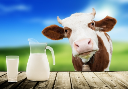 cow and milk Stock Photo