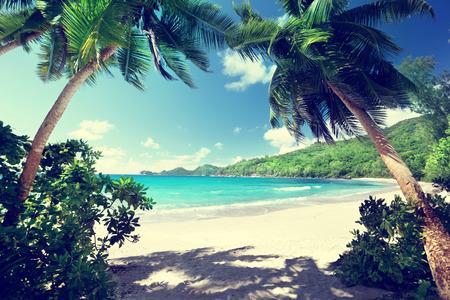coconut tree: beach Takamaka, Mahe island, Seychelles Stock Photo