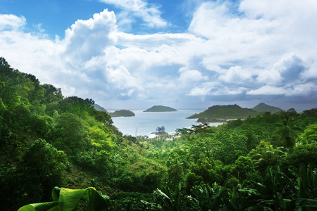 jungle of seychelles island  photo