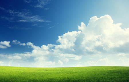 草と完璧な空のフィールド 写真素材 - 25716060