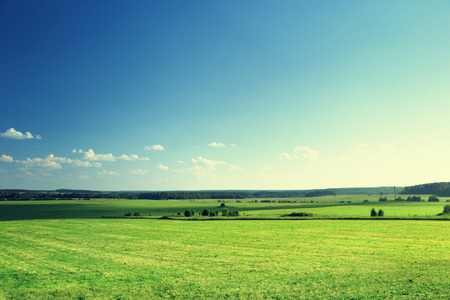 plain background: field of grass and forest