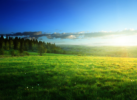 field of spring grass and forest  in sunset time Stock Photo - 25908986