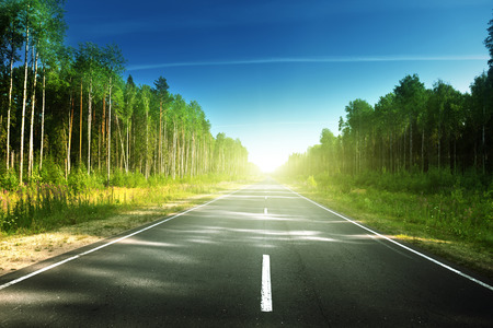 forest road: road in summer forest Stock Photo