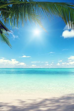 Caraïbische zee en kokos palmen