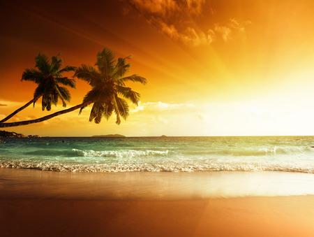 gold tree: sunset on the beach of caribbean sea