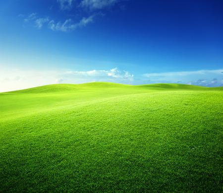 meadow  grass: campo verde y cielo azul