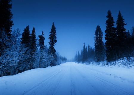 night road in winter forest photo