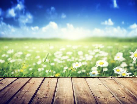flowers bokeh: field of daisy flowers and wood floor