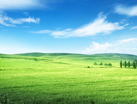 campo de flores: colinas en día soleado Toscana, Italia