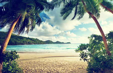 sunset beach: sunset on the beach Takamaka, Mahe island, Seychelles