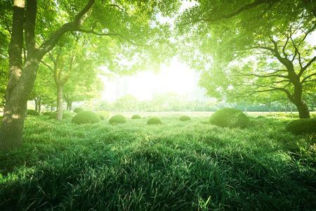 Día soleado en el parque de verano