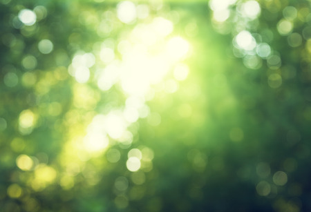bokeh in sunny forest photo