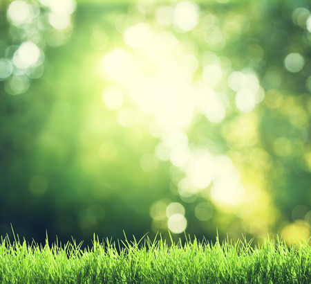 sunshine background: green grass in sunny forest Stock Photo