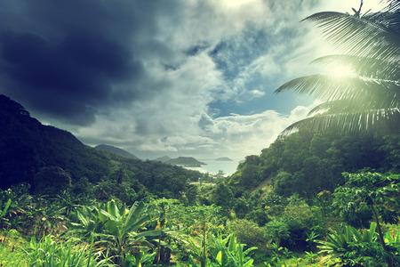 Dschungel der Seychellen Insel Standard-Bild - 30520910