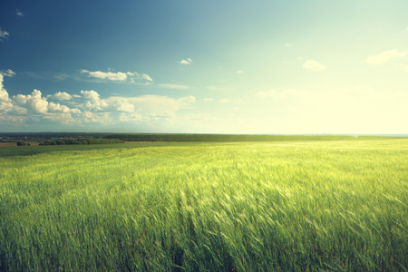 vista: field of barley and sunny day  Stock Photo