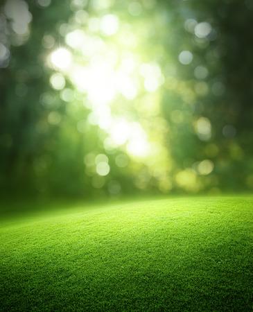 Spring forest  background Standard-Bild