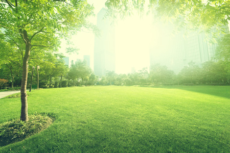 sunny day in park photo