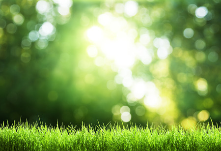 green grass in sunny forest photo